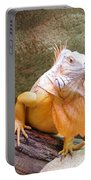 Out Of Africa Orange Lizard 1 Portable Battery Charger