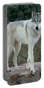 Out Of Africa Wolf  Portable Battery Charger