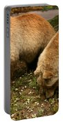 Out Of Hibernation Portable Battery Charger