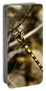 Pacific Spiketail Dragonfly On Mt Tamalpais Portable Battery Charger