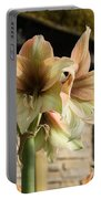 Pale Pastel Amaryllis  Portable Battery Charger