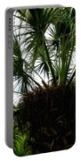 Palm Tree In Curacao Portable Battery Charger