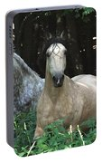 Paso Fino Mares Pay Attention Portable Battery Charger