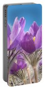 Pasque Flowers Close-up In Natural Environment Portable Battery Charger