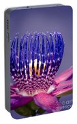 Passiflora Alata - Ruby Star - Ouvaca - Fragrant Granadilla -  Winged-stem Passion Flower Portable Battery Charger