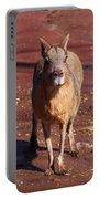 Patagonian Mara Portable Battery Charger