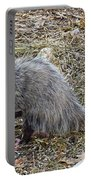 Pawing Possum Portable Battery Charger