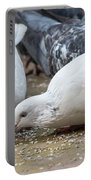 Pecking Pigeons Portable Battery Charger