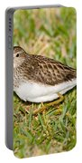 Pectoral Sandpiper Portable Battery Charger