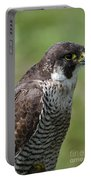 Peregrine Falcon 1 Portable Battery Charger
