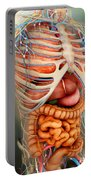 Perspective View Of Human Body, Whole Portable Battery Charger