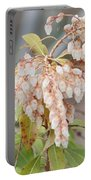Pieris Japonica 'dorothy Wycoff' Andromeda  Portable Battery Charger