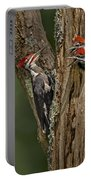 Pilated Woodpecker Family Portable Battery Charger by Susan Candelario