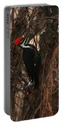 Pileated In Winter Portable Battery Charger