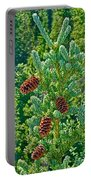 Pine Cones On Spruce Tree In Rancheria Falls Recreation Site-yt Portable Battery Charger