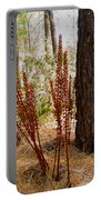 Pine Drops And Ponderosa Pine In Des Chutes Nf-or  Portable Battery Charger