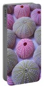 Pink And Green Urchins Portable Battery Charger