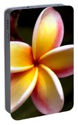 Pink And Yellow Plumeria Portable Battery Charger