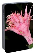 Pink Bromeliad Bloom - Close Up Portable Battery Charger