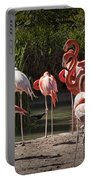 Pink Falmingos At The San Diego Zoo Portable Battery Charger