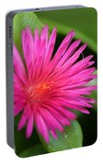 Pink Flower Of Succulent Carpet Weed  Portable Battery Charger