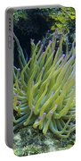 Pink Tipped Giant Sea Anemone Portable Battery Charger
