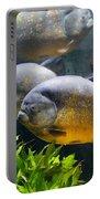 Piranha Portable Battery Charger