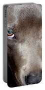Pit Bull - 1 Portable Battery Charger