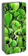 Pitcher Plants Palm Springs Portable Battery Charger