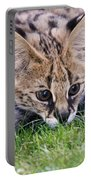 Playful Serval Portable Battery Charger