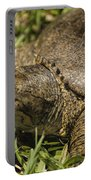Pointed Nose Florida Softshell Turtle - Apalone Ferox Portable Battery Charger