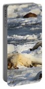 Polar Bear Mother And Cub Grooming Portable Battery Charger