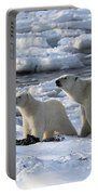 Polar Bear Mother And Cub Sniffing The Air Portable Battery Charger