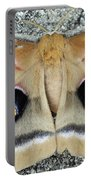 Polyphemus Moth  Portable Battery Charger