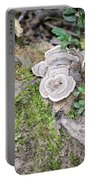 Polypores And Moss Portable Battery Charger