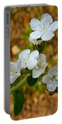 Popcorn Flower In Park Sierra-ca Portable Battery Charger