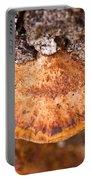 Poria Shelf Fungi 1 Portable Battery Charger