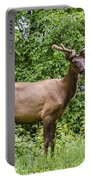 Posing Portable Battery Charger by Carolyn Marshall