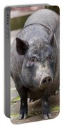 Potbelly Pig Standing Portable Battery Charger