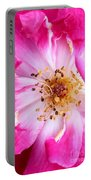 Pretty In Pink Rose Close Up Portable Battery Charger