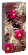 Prickley Cactus Plants Portable Battery Charger