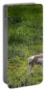 Pronghorn Antelope Among Wildflowers Portable Battery Charger