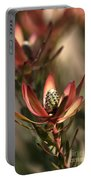Protea  Portable Battery Charger