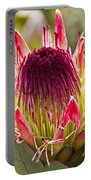 Protea Sugarbush Portable Battery Charger