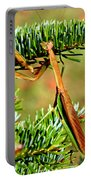 Prying Mantis On The Pine Tree Portable Battery Charger