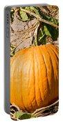 Pumpkin Growing In Pumpkin Field Portable Battery Charger