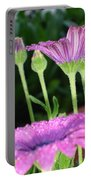 Purple And Pink Daisy Flower In Full Bloom Portable Battery Charger