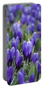 Purple Crocuses Portable Battery Charger