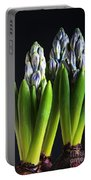 Purple Hyacinth Ready For Spring. Portable Battery Charger