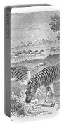 Quagga, Historical Illustration, 1869 Portable Battery Charger